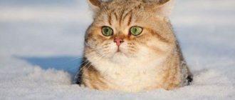 Много загадок о зиме
