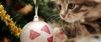 Викторины для детей «Новогодний калейдоскоп»