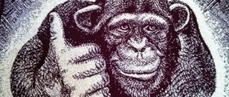 Познавательная викторина про обезьян