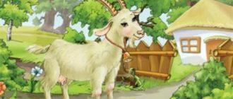 Викторина «Сказки про козу» (с ответами)
