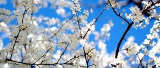 Викторина «Весна-Красна» (с ответами)