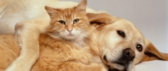 Викторина про собак (с ответами)