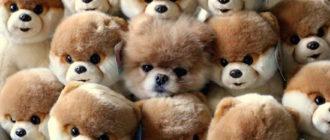 Викторина для школьников с ответами на тему Собаки