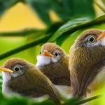 Викторина о птицах для школьников с ответами