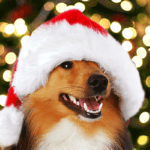 Загадки к году собаки