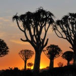 Викторина о Намибии