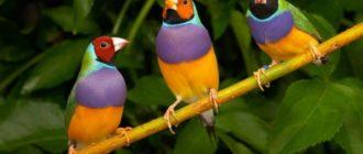 Вопросы  с ответами о птицах