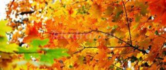 Викторина «Осенний марафон»