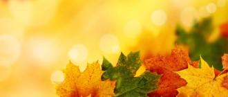 24 вопроса про осень для викторины