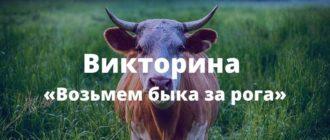 """""""Возьмем быка за рога"""" - простая викторина"""
