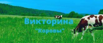 """Детская викторина """"Коровы"""""""